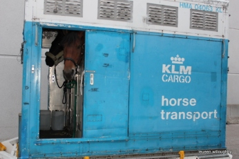52 Horses Stranded in a Cargo Plane at the Singapore Airport
