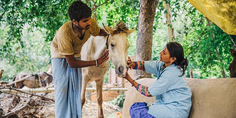 india-treating-horse-810