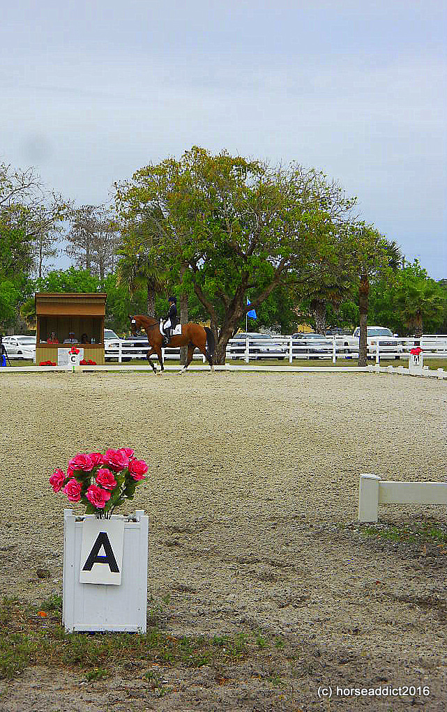 White Fences competition ring