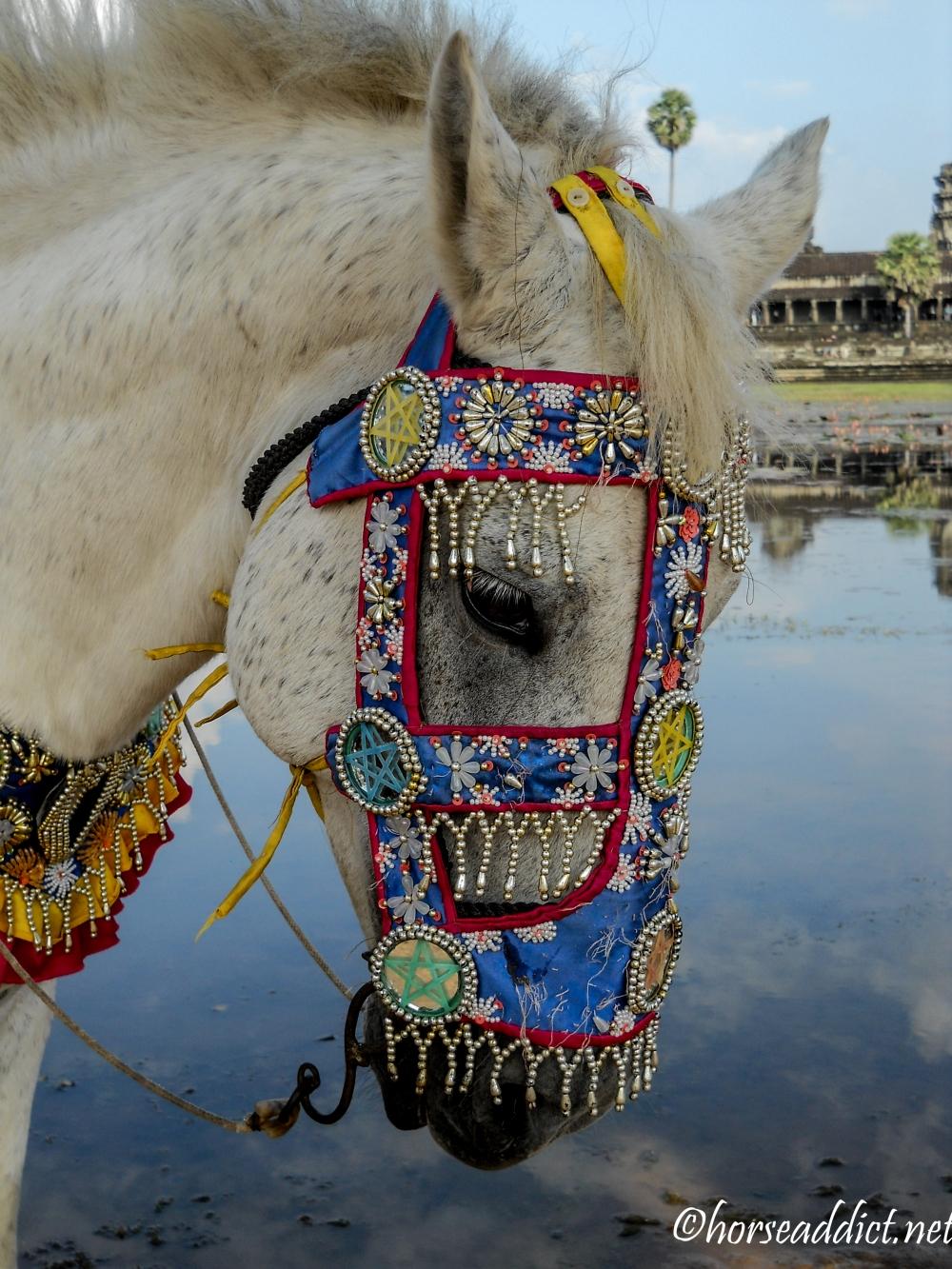 Angkor Wat  pony