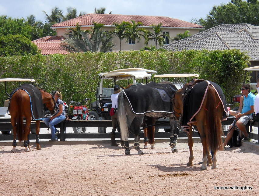 Horses wait for their riders to arrive.