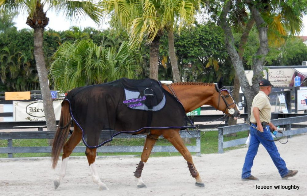 Grooms bring horses to the ring