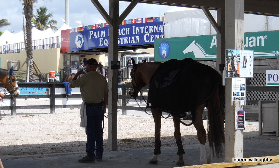 International jumper horses  have a shaded area to wait.