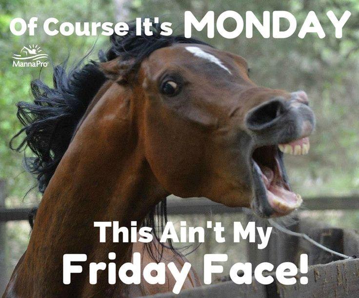 1dcc7947c51f7405f0e018558bbeb00f--funny-horse-sayings-funny-horse-memes
