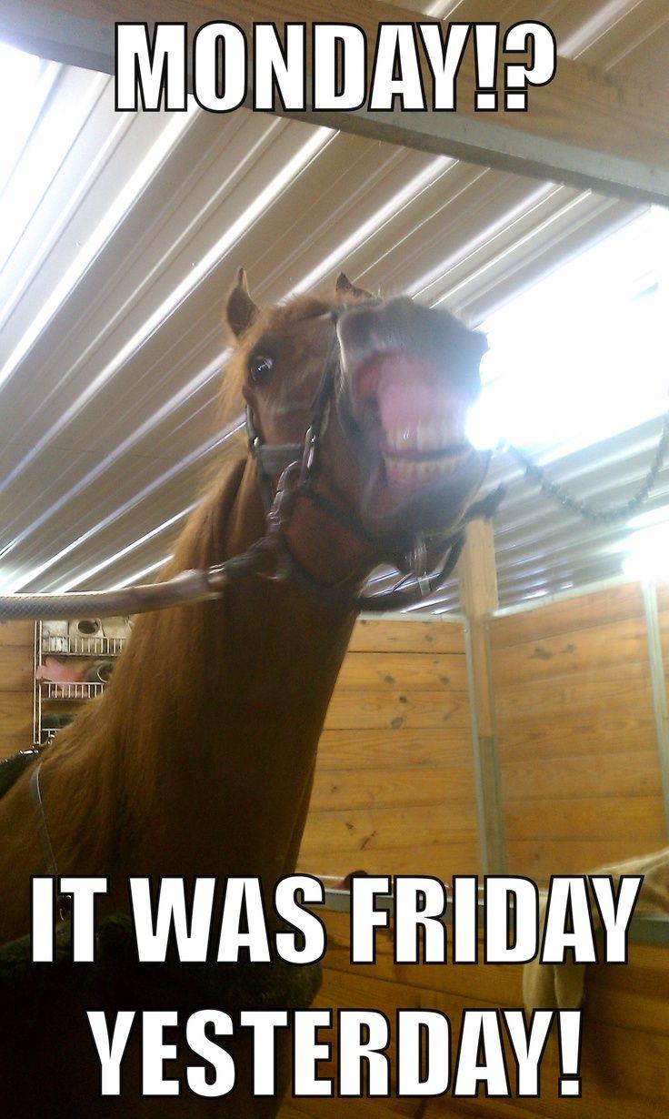 f2af2c51a705dc01ffdf5afe5b6118d2--horse-meme-funny-horses