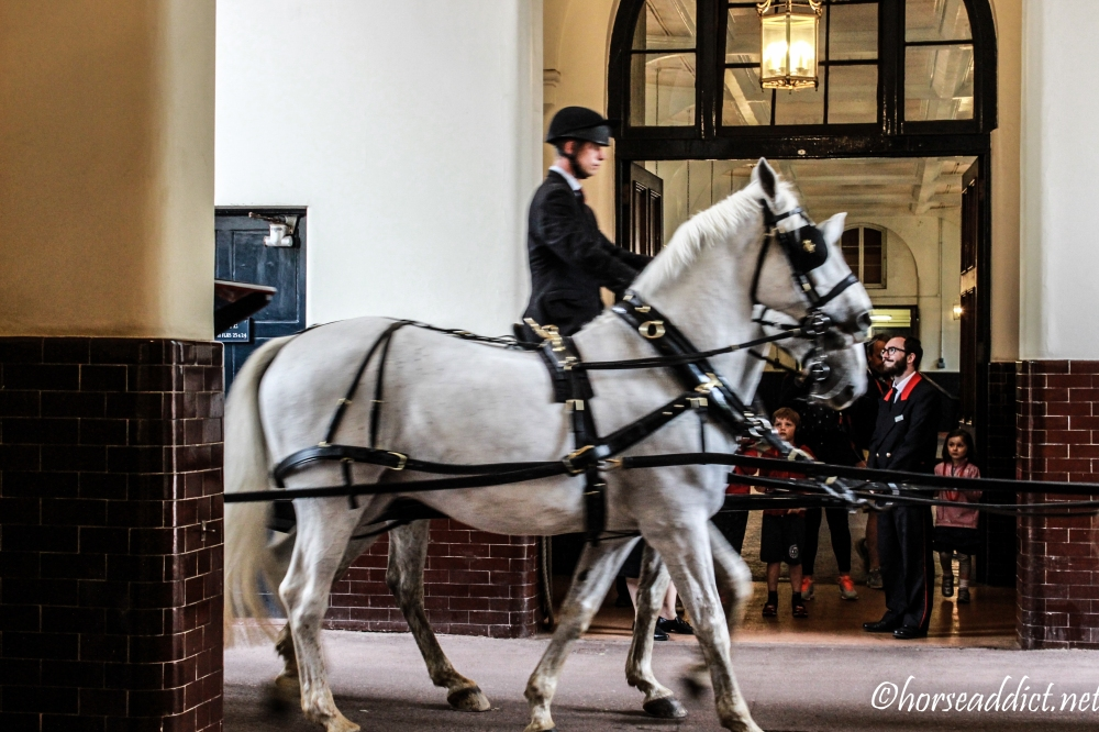 royalmews-2609