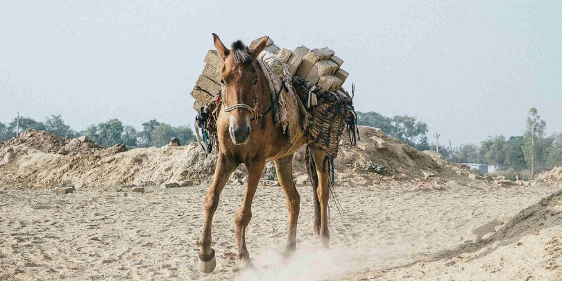 horse-carrying-load